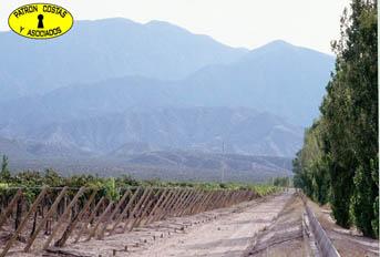 411 HAS VIÑEDOS EN CHILECITO (ANGUINAN)